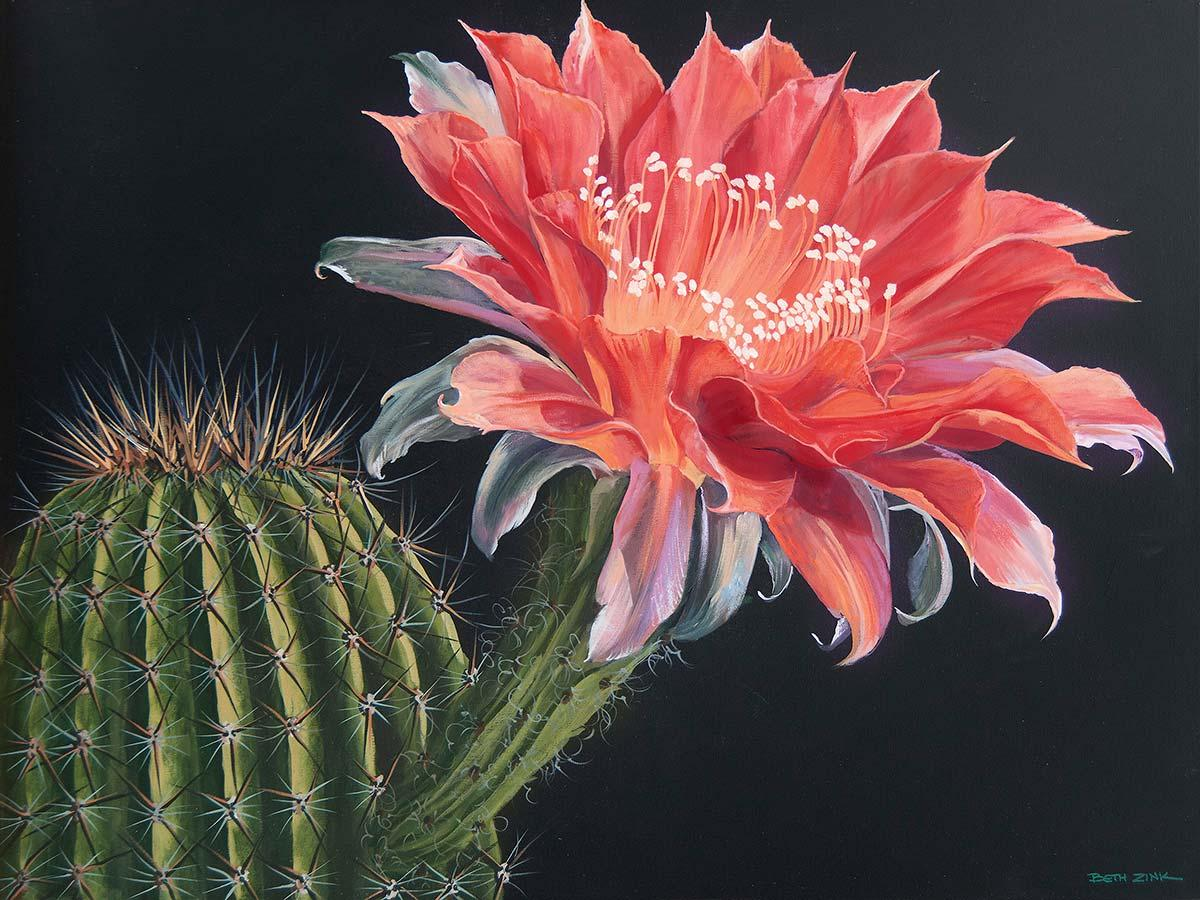 beth zink painting blooming pink flower from cactus