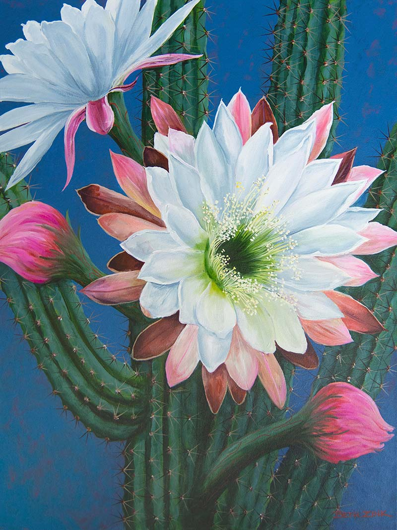 beth zink painting cactus with pink and white flowers blooming