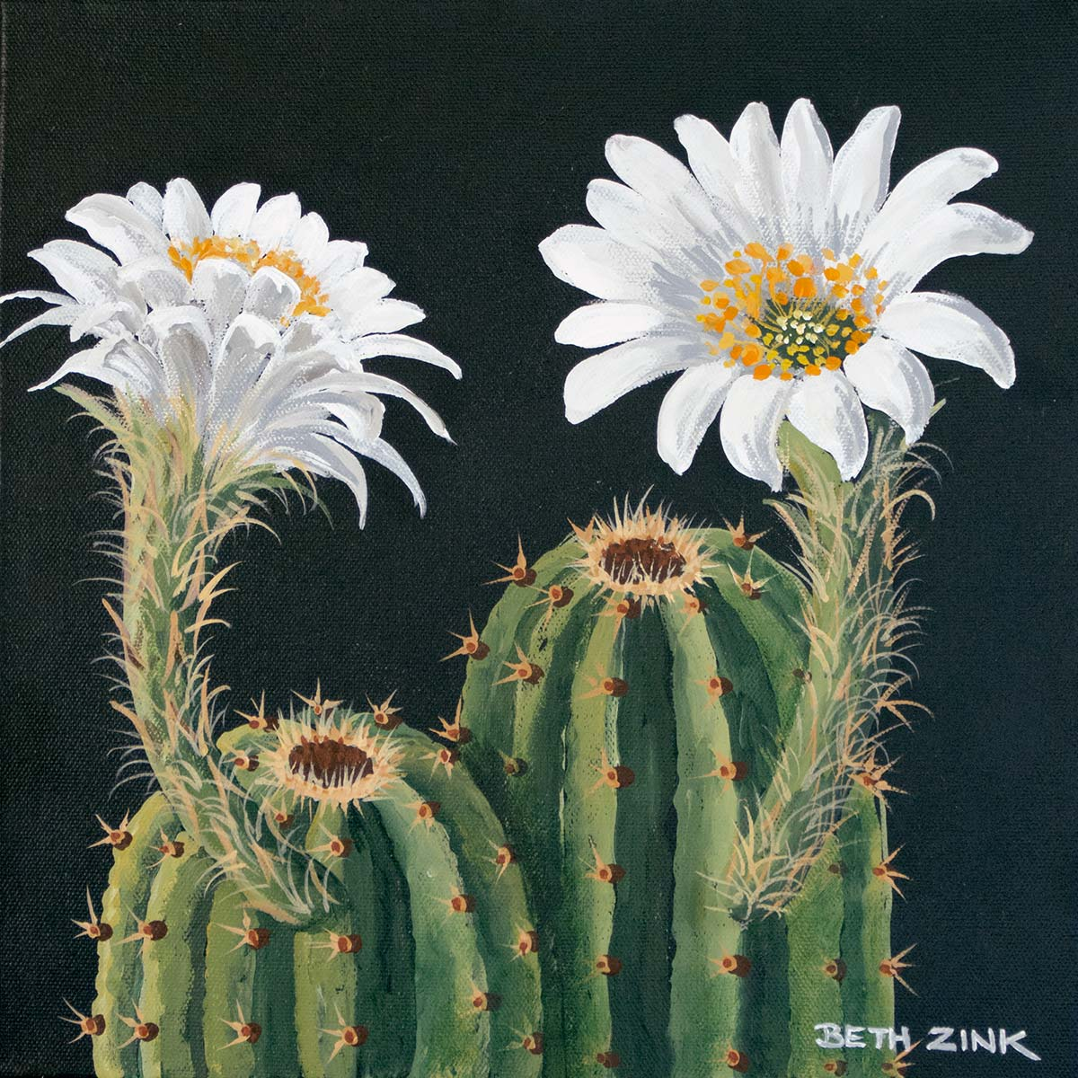 beth zink painting cereus with white flowers